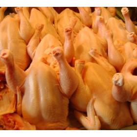 Firm Chicken