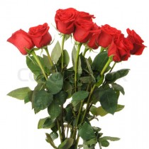 10 red rose bouquet valentine gift